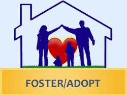 Foster Care Adoption Application